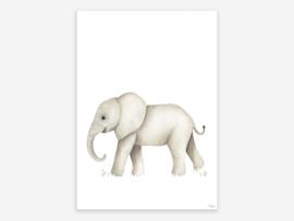 A4 olifant