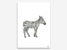 A4 zebra