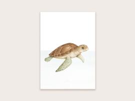 Ansichtkaart schildpad