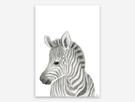 A4 kop zebra