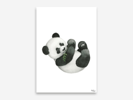 A5 panda
