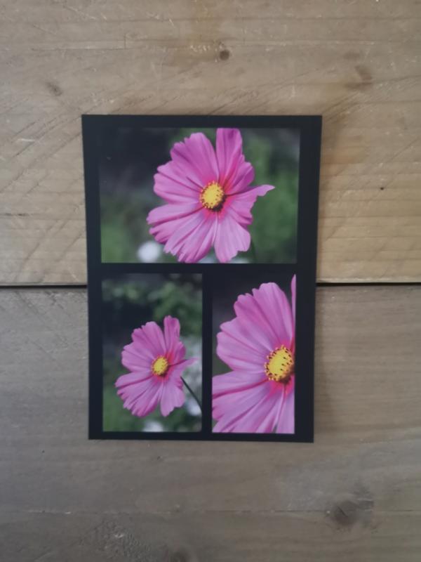 Bloem - roze