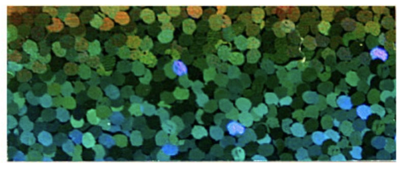Flex | Sparkle effect Multi Color