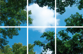 Wolk-bos plafond  | Fotoprint | 6 panelen | 60x60 cm