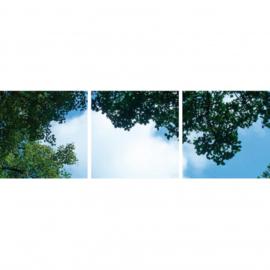 Wolk-bos plafond  | Fotoprint | 3 panelen | 60x60 cm