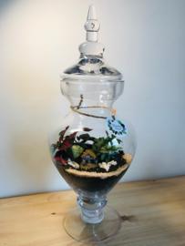 One of a kind terrarium