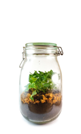 Plants in a jar M