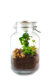 Plants in a jar square