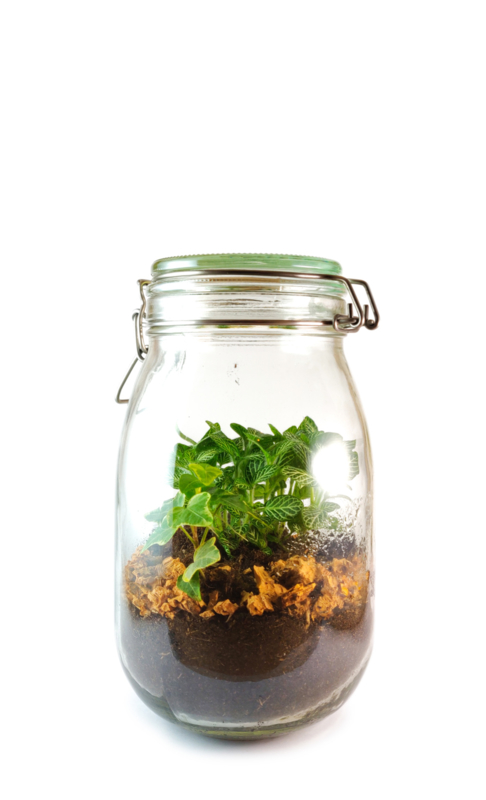 Plants in a jar M