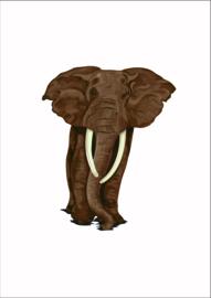 Dieren poster olifant