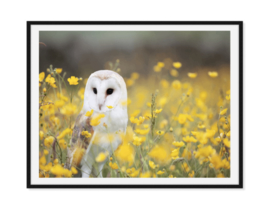 Uil in bloemenveld - Poster