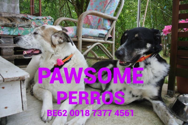 Pawsome Perros Paracord Hondenhalbanden en lijnen op aanvraag