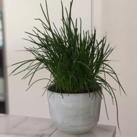 Herb Pot S  - Kruidenpot  S i-058