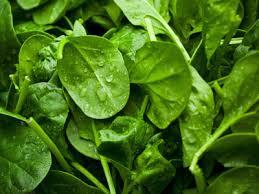 spinazie gewassen 300 gram