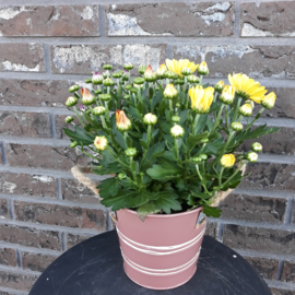 Bolchrysant in zink