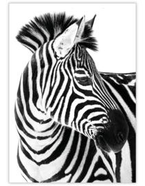 zebra- Ansichtkaart - giveX