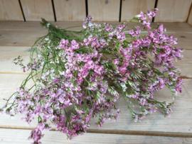 Statice fijn roze (UITVERKOCHT)