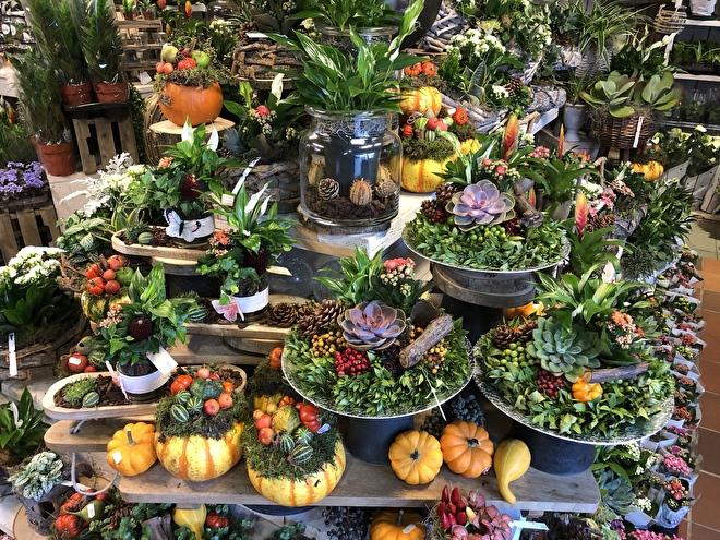 Plant arrangementen