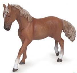 Paard bruine merrie