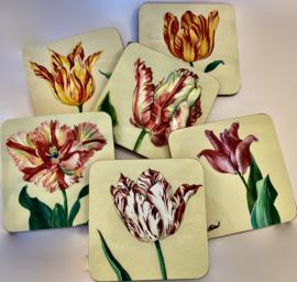 6 Onderzetters met geschilderde tulpen