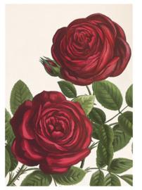 Notitieschrift A5 ongelinieerd twee rozen
