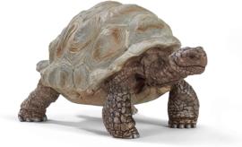Reuzenschildpad - Schleich 14824
