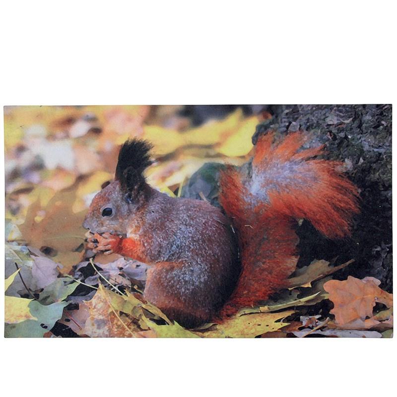 deurmat eekhoorn