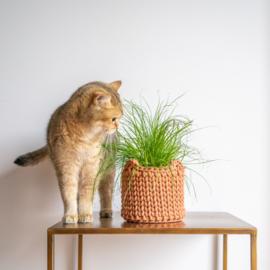 Mand kattenoren