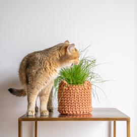 Mand kattenoren - Terracotta