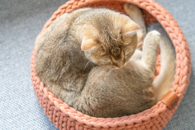 How to select the purrfect size basket