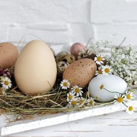 Ambiente servetten Eieren