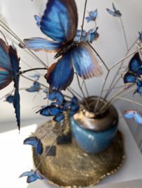 Vlindertakken blue
