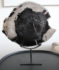 Schijf van versteend hout op standaard