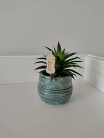 Plantenprikker flesje