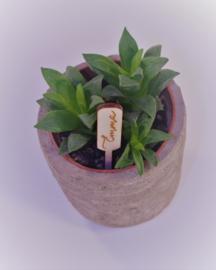 Plantenprikker rechthoek