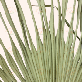Gedroogd palmblad Natural, 2 stuks
