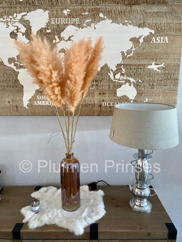 Pampasgras Gedroogd Peach 95 cm. licht fluffy per stuk
