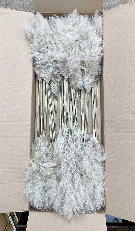 gedroogde pampasgras pluimen in doos