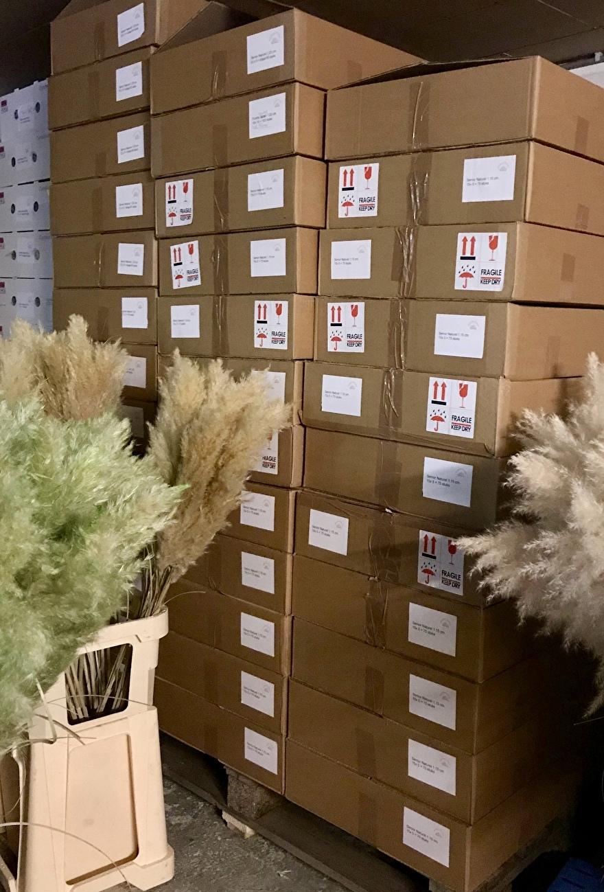 voorraad gedroogde pampasgras dozen
