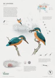 Poster - De IJsvogel