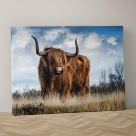 Schotse hooglander op canvas