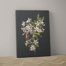 Azalea in bloei