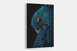 Blauwe ara papegaai op canvas