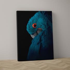 Blauwe ara op canvas