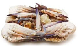 Mooijer Blue cut swimming crab  1kg