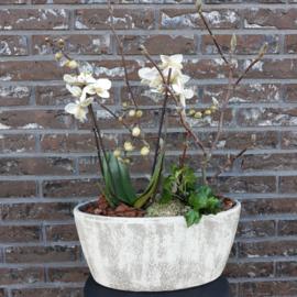 Arrangement Orchidee