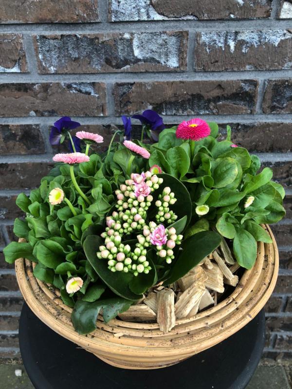Plantenarrangement -vrolijk rond-