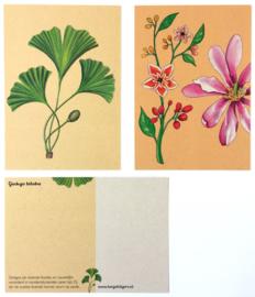 8 Evolutie Postkaarten