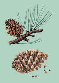 Postkaart Evolutie van Planten - per stuk