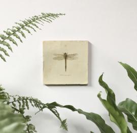 Magneettegel Libelle - Groovy Magnets